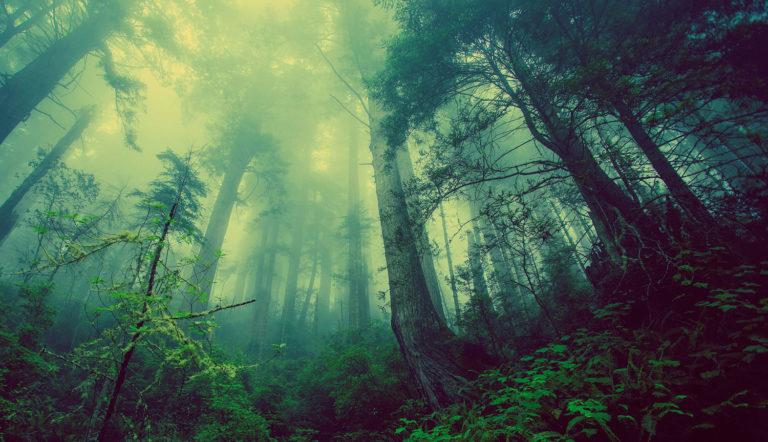 Terra Energies - Forêt
