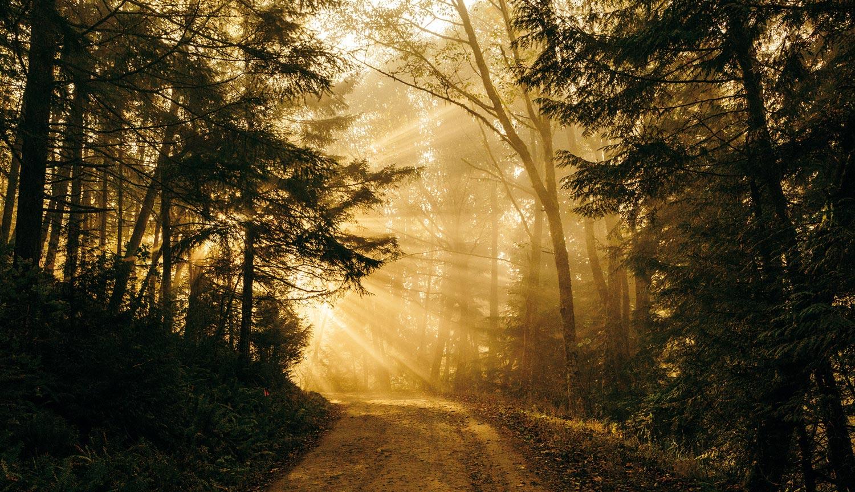 Terra Energies - Forêt - Historique
